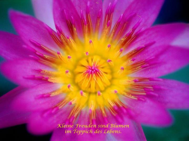 Kleine Freuden sind Blumen