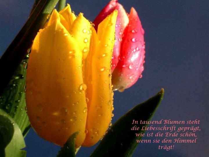 In tausend Blumen steht die Liebesschrift geprägt,