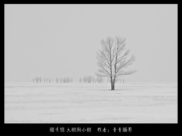 優秀獎 大樹與小樹    作者:青青攝影