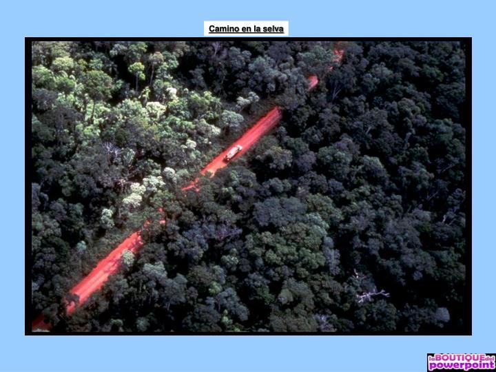 Camino en la selva