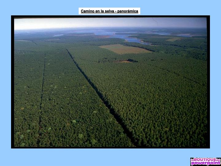 Camino en la selva - panorámica