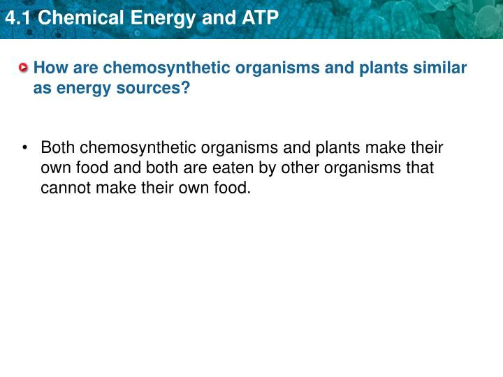 How are chemosynthetic organisms and plants similar as energy sources?