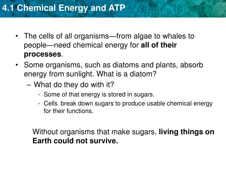 The cells of all organisms—from algae to whales to people—need chemical energy for