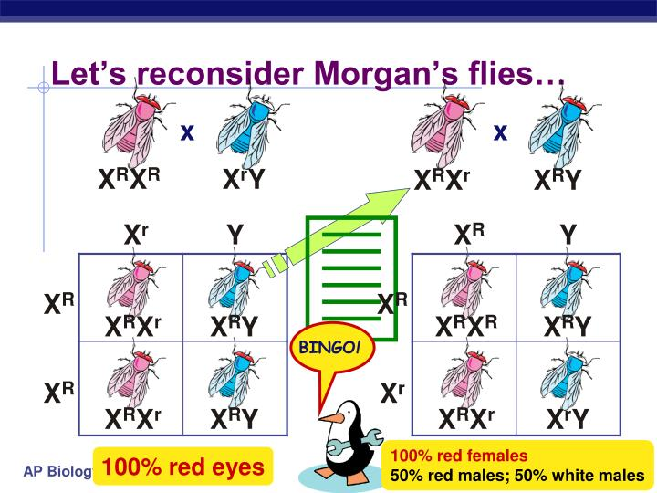 Let's reconsider Morgan's flies…