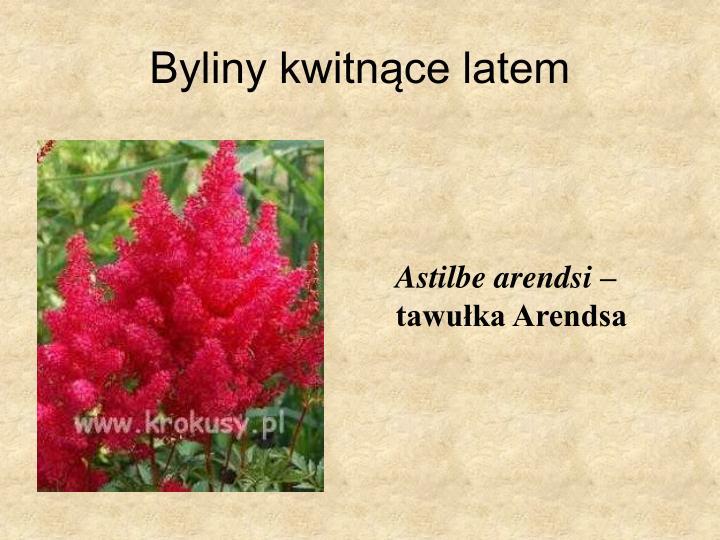 Byliny kwitnące latem