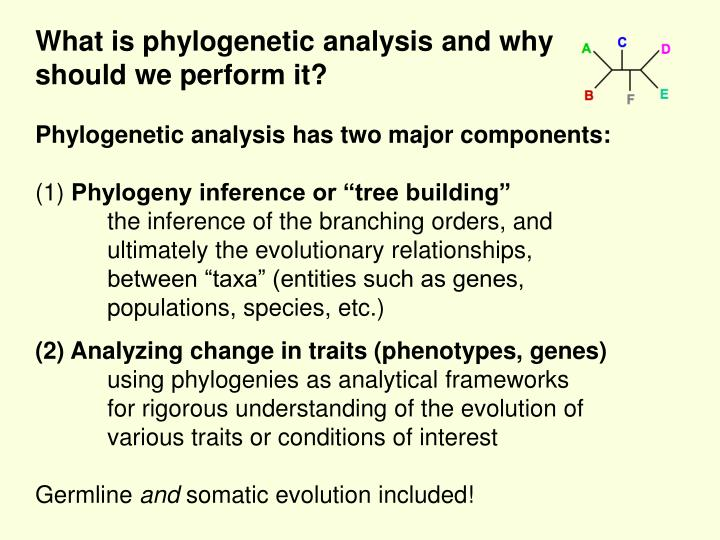 What is phylogenetic analysis and why should we perform it?