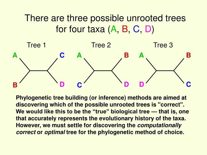 There are three possible unrooted trees for four taxa (