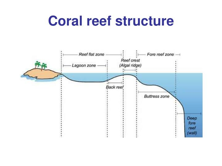 Ppt - Coral Reefs Chapter 9 Powerpoint Presentation