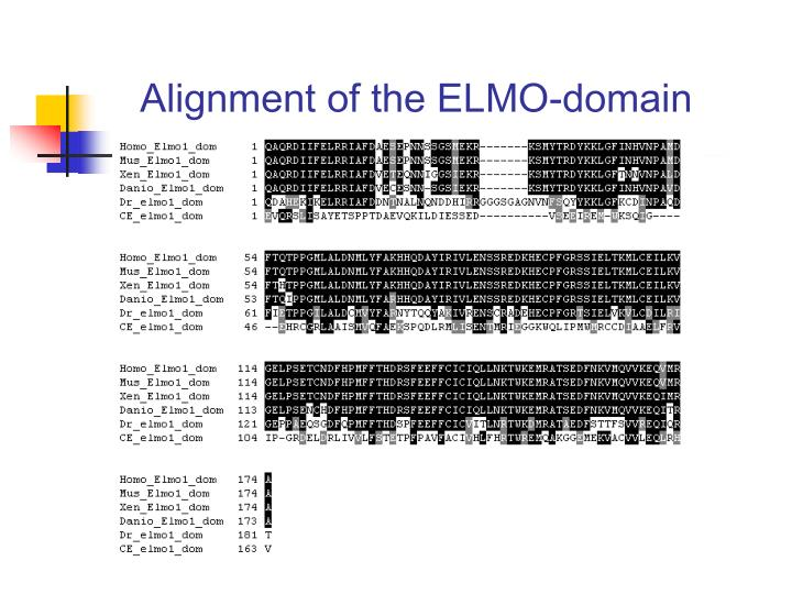 Alignment of the ELMO-domain