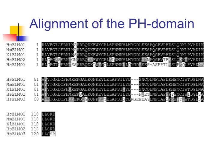 Alignment of the PH-domain