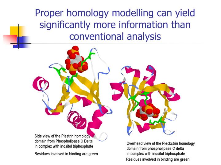 Proper homology modelling can yield significantly more information than conventional analysis