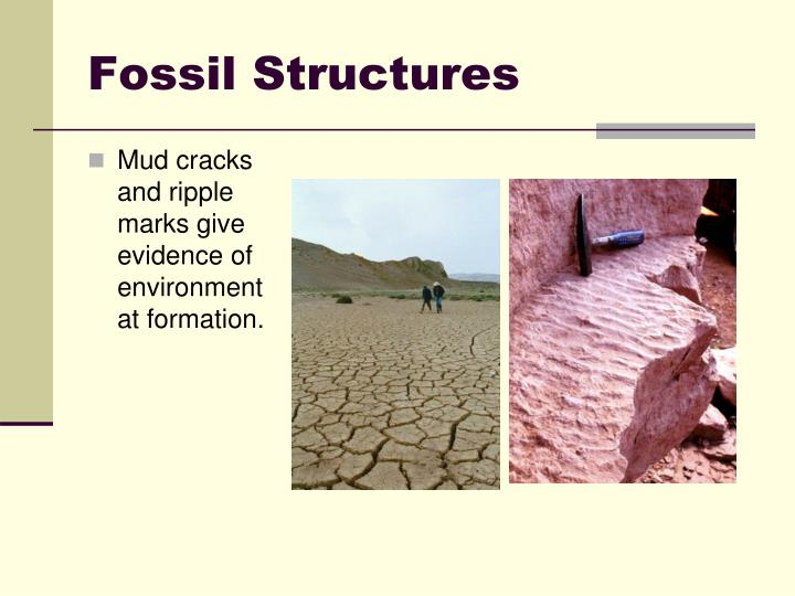 Fossil Structures