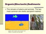 organic bioclastic sediments