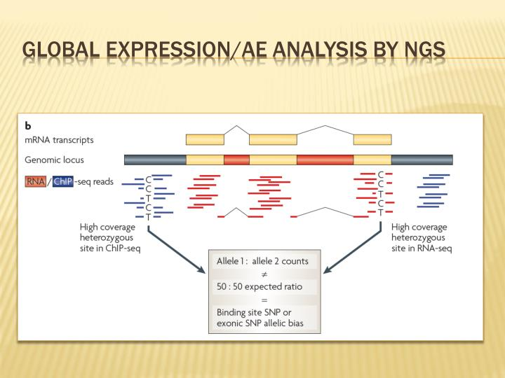 Global expression/AE analysis by NGS