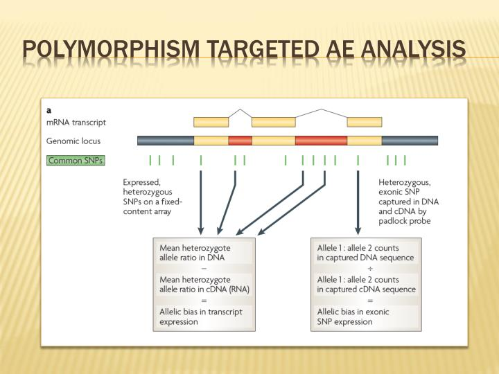 Polymorphism targeted AE analysis