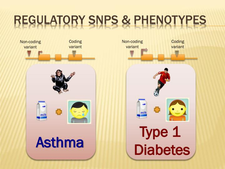 Regulatory snps phenotypes