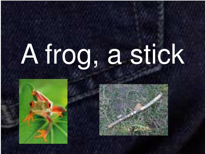 A frog, a stick