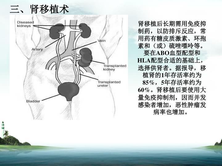 三、肾移植术
