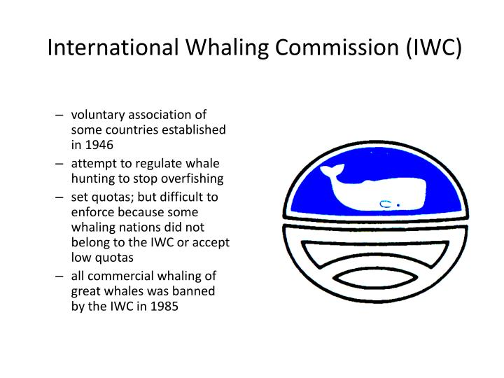 international whaling committee The pro-whaling interests regularly attempt to narrow this down to only delivering recommendations on whaling quotas, but the wider pro-conservation membership often seeks to ensure that the scientific committee is looking at issues that affect the conservation and protection of whales and dolphins.