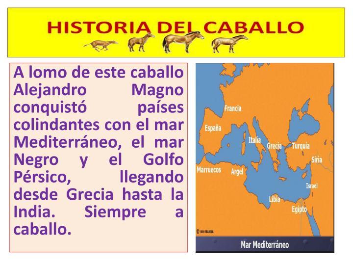 A lomo de este caballo Alejandro Magno conquistó países colindantes con el mar Mediterráneo, el mar Negro y el Golfo Pérsico, llegando desde Grecia hasta la India. Siempre a caballo.