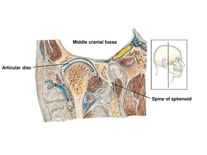 Middle cranial fossa