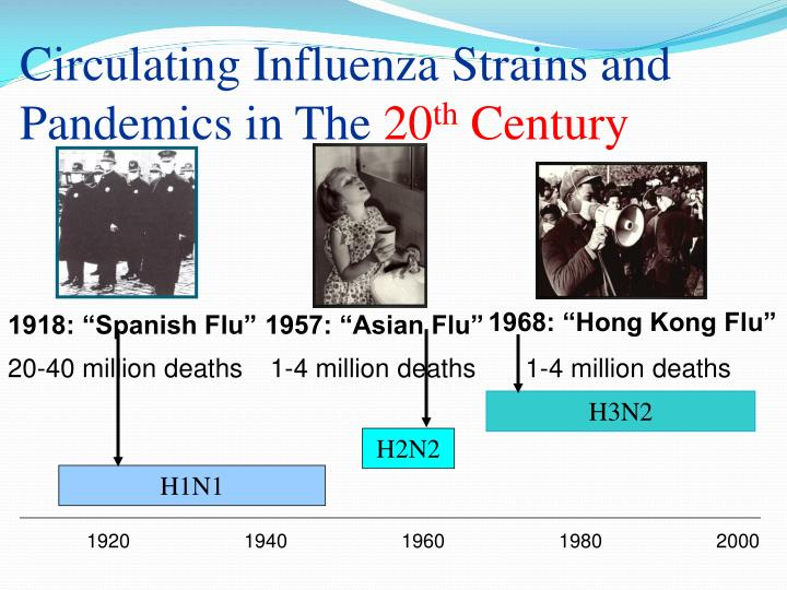 Circulating influenza strains and pandemics in the 20 th century