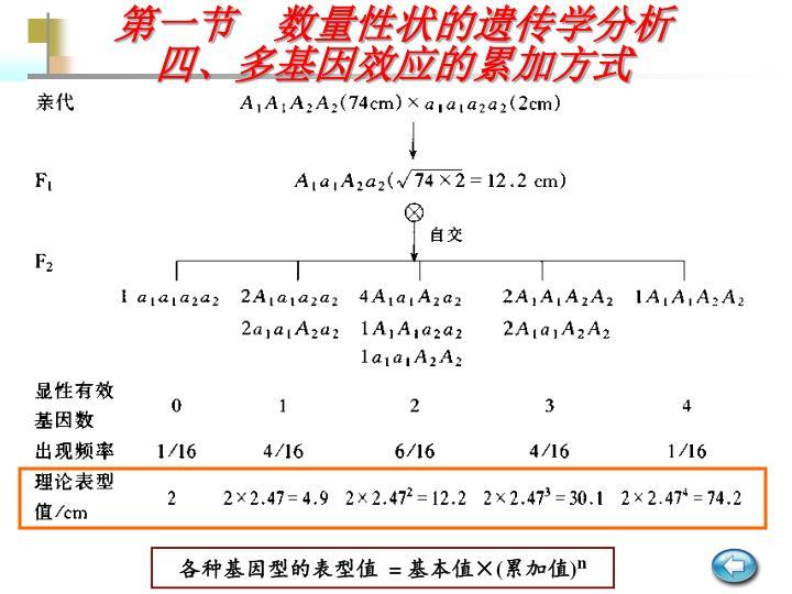 第一节  数量性状的遗传学分析