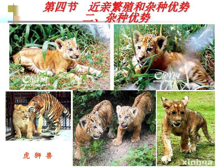 虎 狮 兽