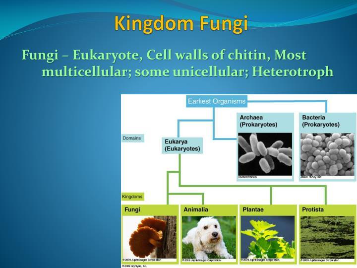 Fungi – Eukaryote, Cell walls of chitin, Most
