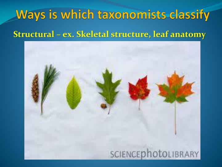 Structural – ex. Skeletal structure, leaf anatomy