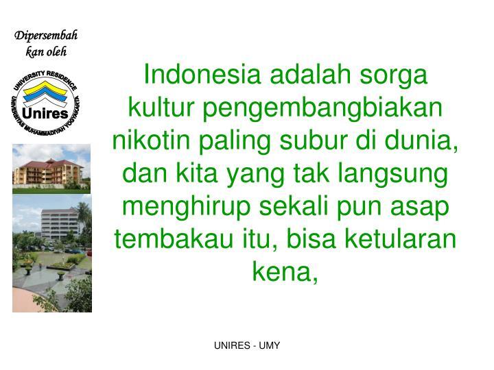 Indonesia adalah sorga kultur pengembangbiakan nikotin paling subur di dunia,