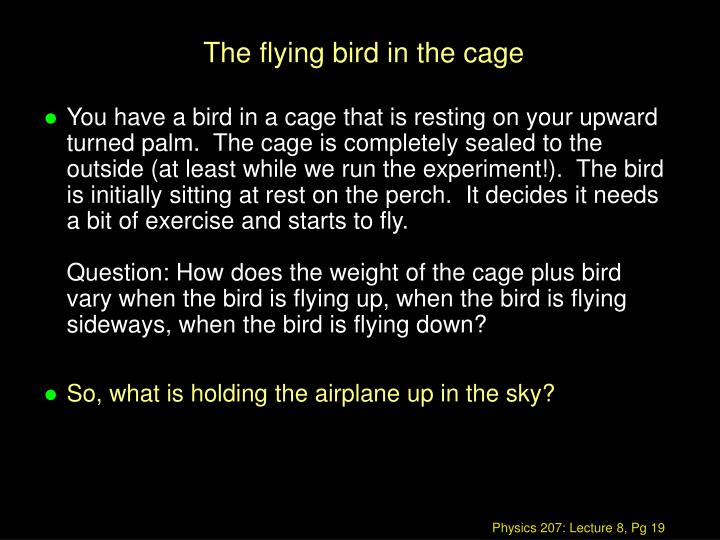The flying bird in the cage