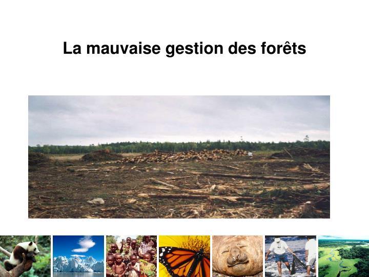 La mauvaise gestion des forêts