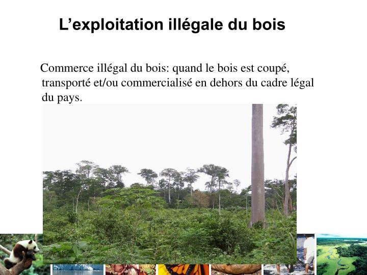 L'exploitation illégale du bois