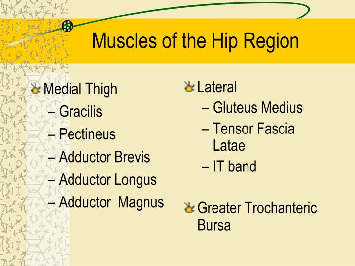 Medial Thigh