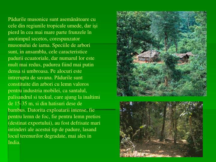 Pădurile musonice sunt asemănătoare cu cele din regiunile tropicale umede, dar işi pierd în cea mai mare parte frunzele în anotimpul secetos, corespunzator musonului de iarna. Speciile de arbori sunt, in ansamblu, cele caracteristice padurii ecuatoriale, dar numarul lor este mult mai redus, padurea fiind mai putin densa si umbroasa. Pe alocuri este intrerupta de savana. Pădurile sunt constituite din arbori cu lemn valoros pentru industria mobilei, ca santalul, palisandrul si teckul, care ajung la inaltimi de 15-35 m, si din hatisuri dese de bambus. Datorita exploatarii intense, fie pentru lemn de foc, fie pentru lemn pretios (destinat exportului), au fost defrisate mari intinderi ale acestui tip de padure, lasand locul terenurilor degradate, mai ales in India.