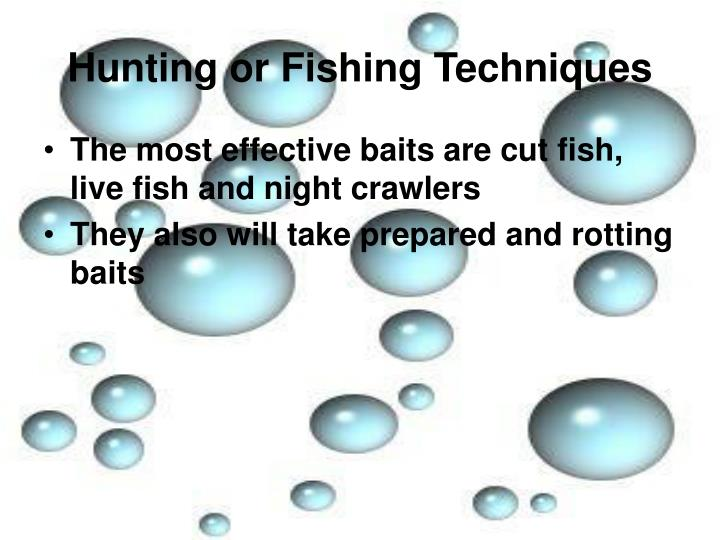 Hunting or Fishing Techniques