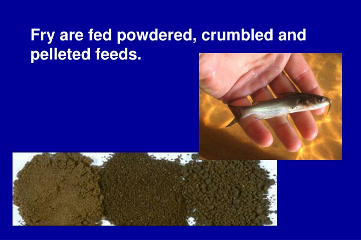 Fry are fed powdered, crumbled and pelleted feeds.