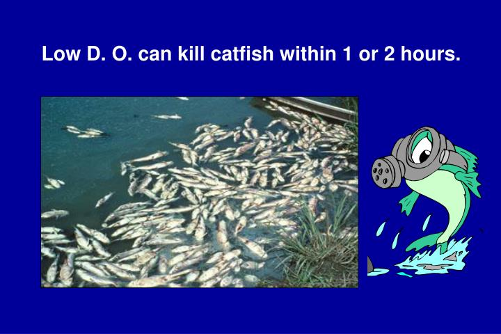 Low D. O. can kill catfish within 1 or 2 hours.