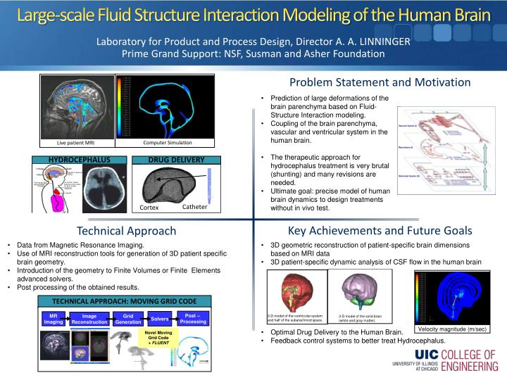 Large scale fluid structure interaction modeling of the human brain