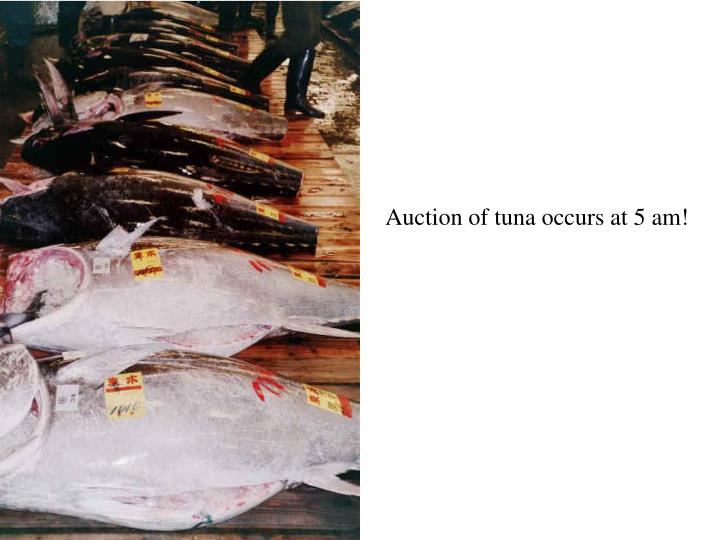 Auction of tuna occurs at 5 am!
