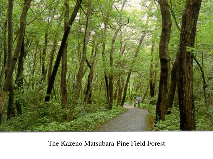 The Kazeno Matsubara-Pine Field Forest