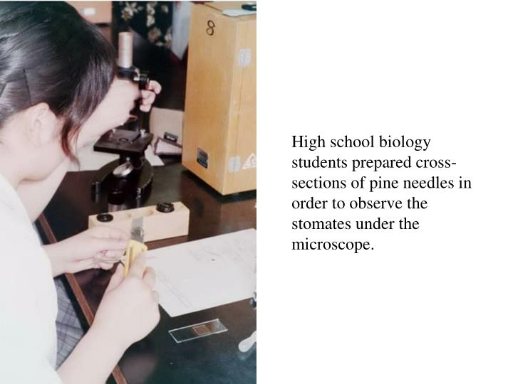 High school biology students prepared cross-sections of pine needles in order to observe the stomates under the microscope.