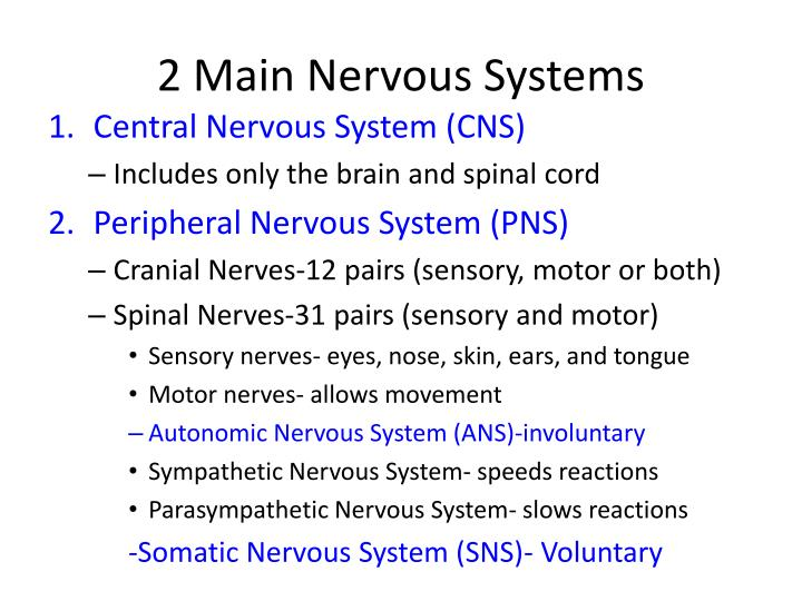 2 main nervous systems