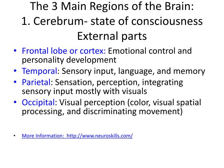The 3 Main Regions of the Brain:
