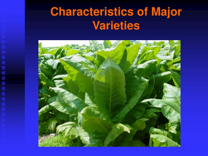 Characteristics of major varieties