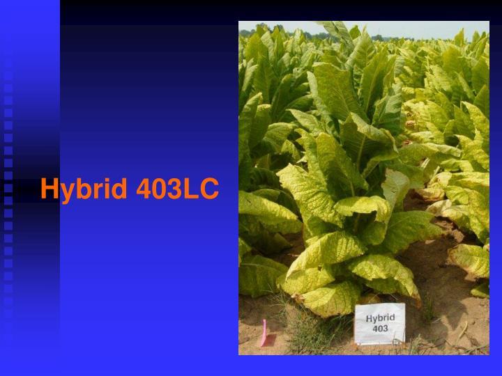 Hybrid 403LC