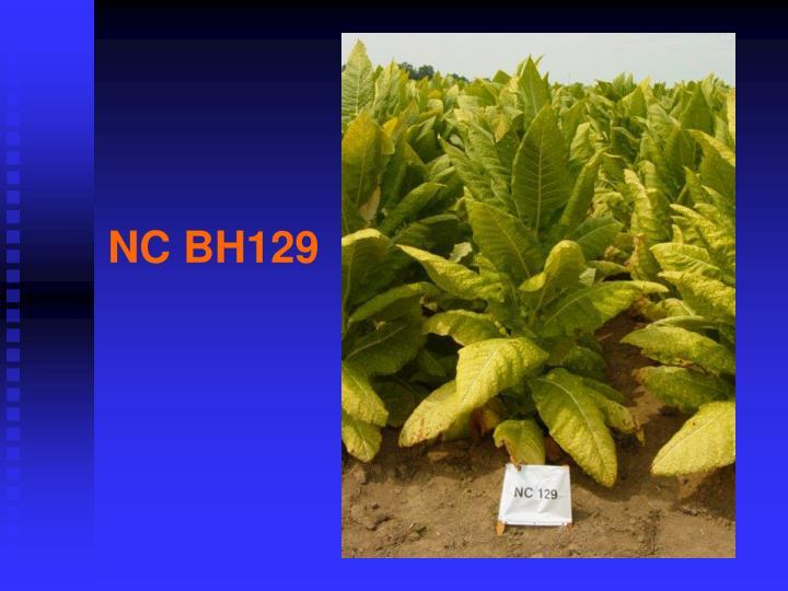 NC BH129