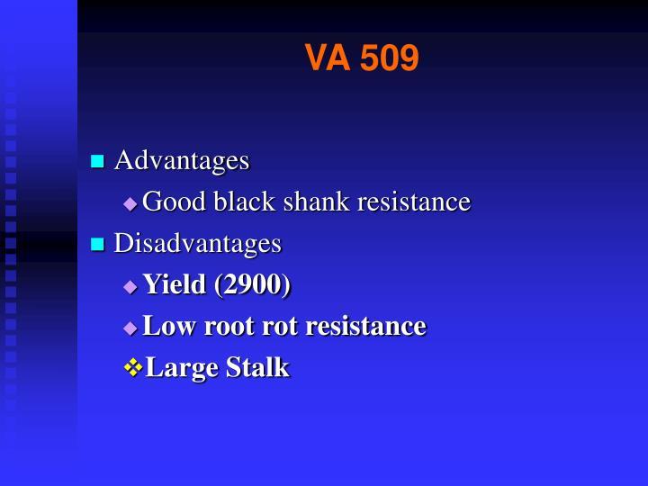 VA 509