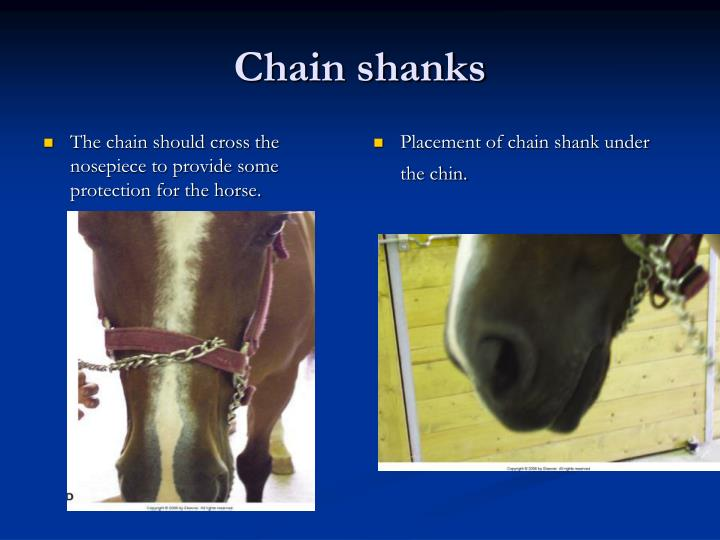 The chain should cross the nosepiece to provide some protection for the horse.